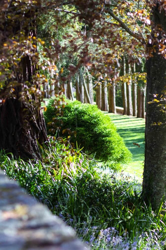 Landscape design sydney dapple landscape designs for Garden designs sydney
